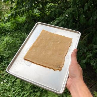 Fresh sample of kombucha pellicle. Credit: thr34d5.
